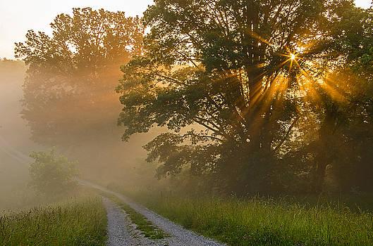Fogy summer morning by Ulrich Burkhalter