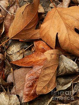 Folded Leaf by Robert Ball