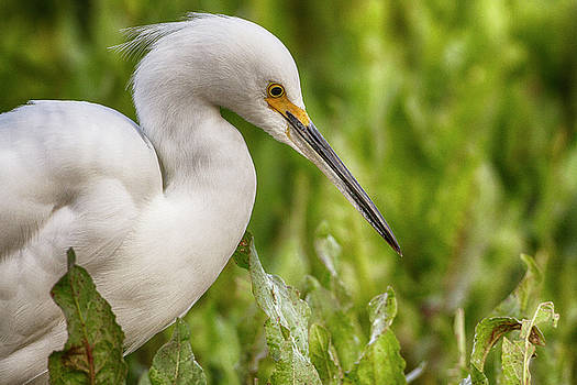 Foliage and Egret by Ruth Jolly