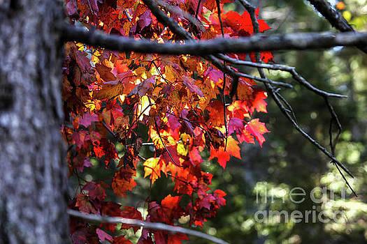 Foliage colors by Miro Vrlik