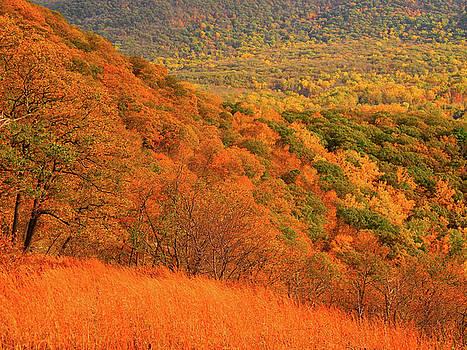 Foliage Hills  by Raymond Salani III