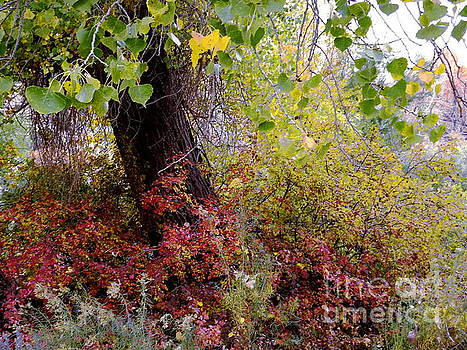 Foliage in Fall by Annie Gibbons