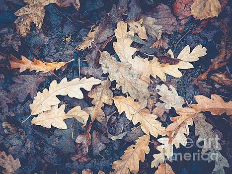 Mariusz Talarek - Foliage