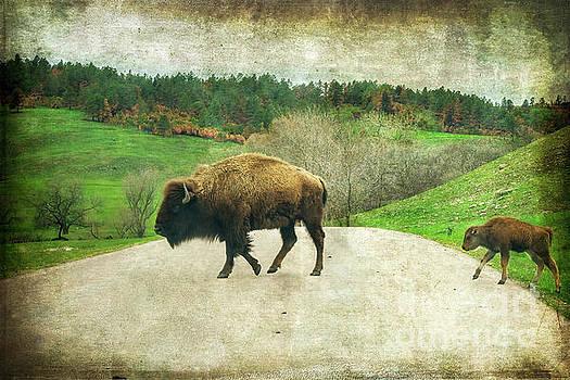 Follow the Leader by Joan McCool