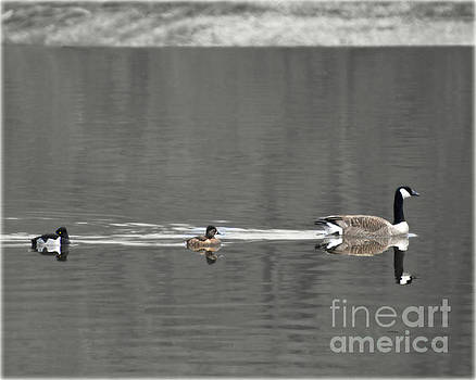 Follow The Leader by Kathy M Krause
