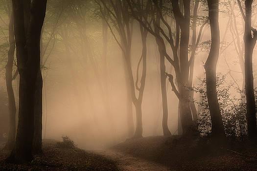 Follow the Light by Tim Abeln