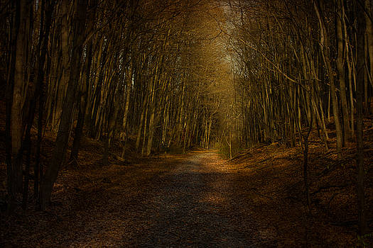 Follow the Light by Victoria Winningham