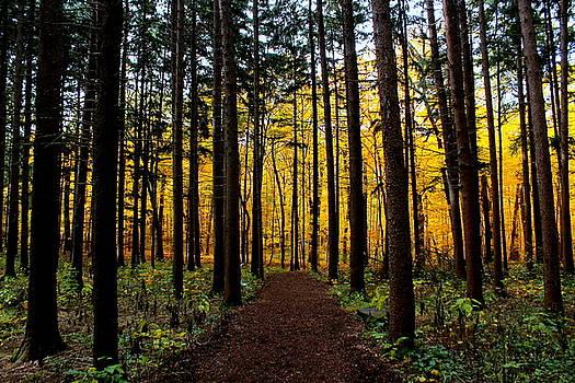 Rosanne Jordan - Follow the Path