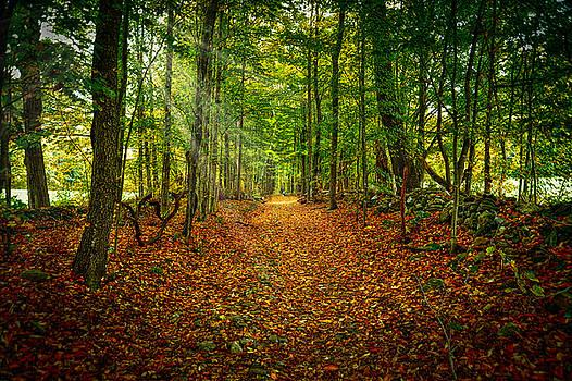 Follow the Yellow Leaf Road by Richard Gehlbach