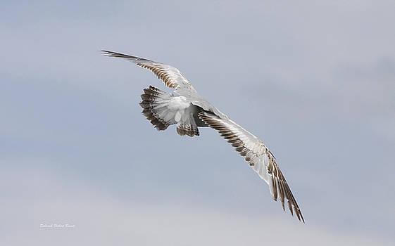 Deborah Benoit - Following The Seagull