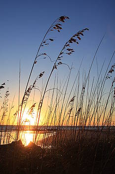 Folly Beach Sunrise SC by Mountains to the Sea Photo