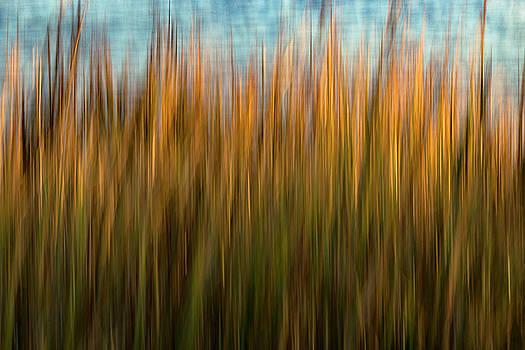 Folly Grass by Nicole Robinson