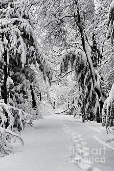 Dan Friend - Foot prints in the snow