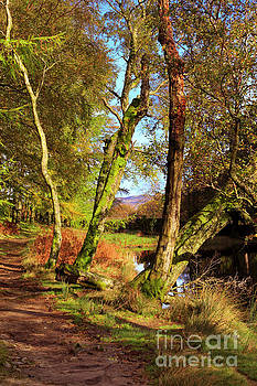 Footpath at the edge of Lantys Tarn in the Lake District Cumbria by Louise Heusinkveld