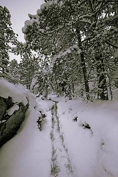 Footpath through snowy forest - monochrome by Ulrich Kunst And Bettina Scheidulin