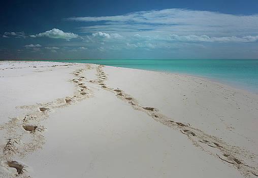 Footprints White Sand Beach by Jim Austin Jimages