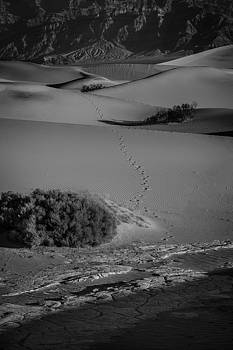 Rick Strobaugh - Footsteps into the Desert