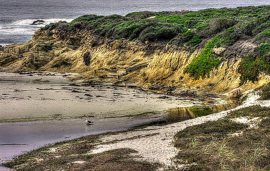 For Now I Prefer This Quiet Tidepool - 17-Mile Drive, Monterey Peninsula - Central California Coast by Michael Mazaika