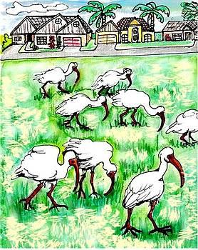 Foraging ibis by Carol Allen Anfinsen