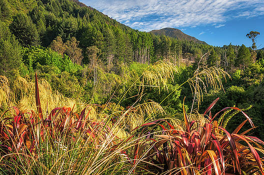 Forest and mountain range at Wilson Bay, NZ. by Daniela Constantinescu