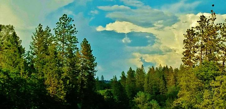 Forest and Sky in High Sierras by Peggy Leyva Conley