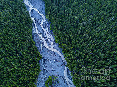 Forest and the River by Mike Reid
