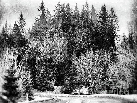Justyna Jaszke JBJart - forest art