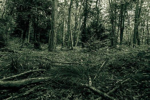 Jacek Wojnarowski - Forest black and white photography