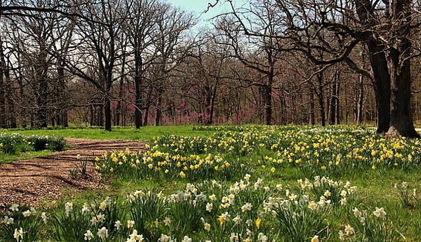 Rosanne Jordan - Forest Blessings in the Spring
