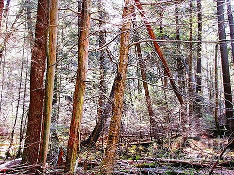 Forest Bling by Melissa Stoudt