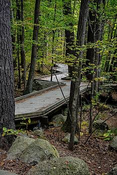 Forest Boardwalk by Cowboy Visions