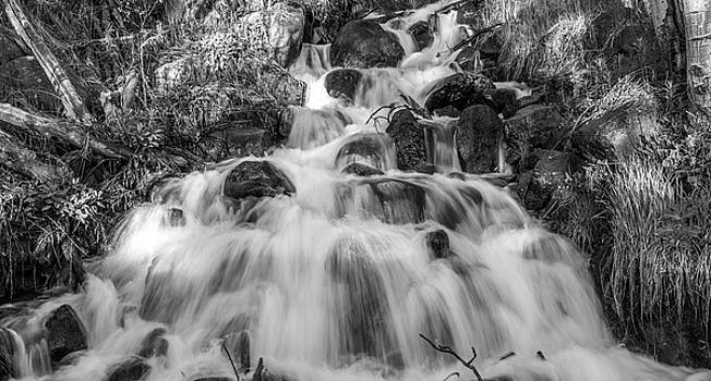 Forest Cascade In Black And White by Michael Putthoff