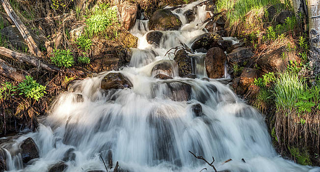 Forest Cascade by Michael Putthoff