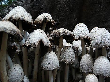 Forest Chorus by Allison Wonderland