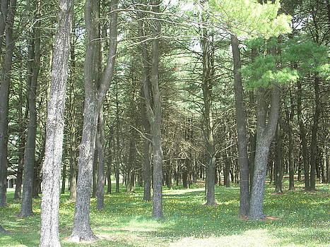 Forest by Deborah Finley