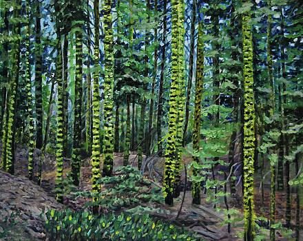 Forest Dream by Nancy Viola