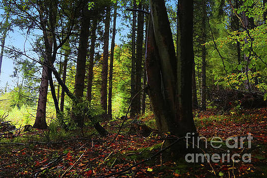 Forest Essence by Mariola Bitner