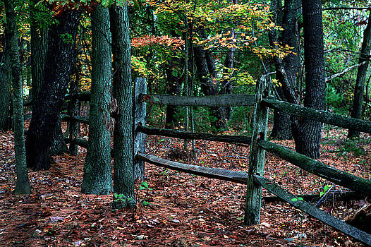 Forest Fence by Lon Casler Bixby