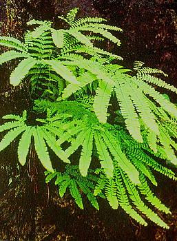 Shasta Eone - Forest Fern