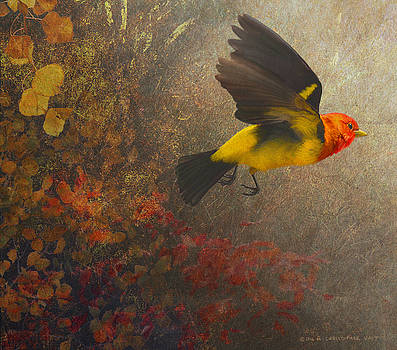 Forest Flight- Western Tanager by R christopher Vest