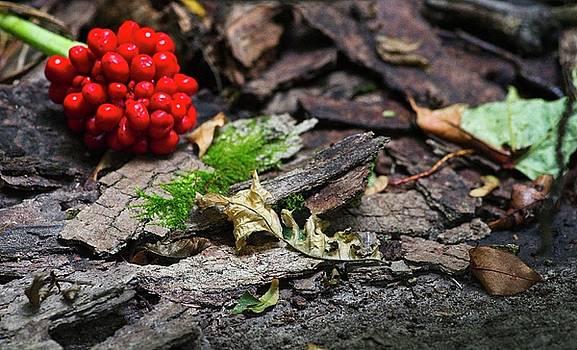 Garvin Hunter - Forest Floor