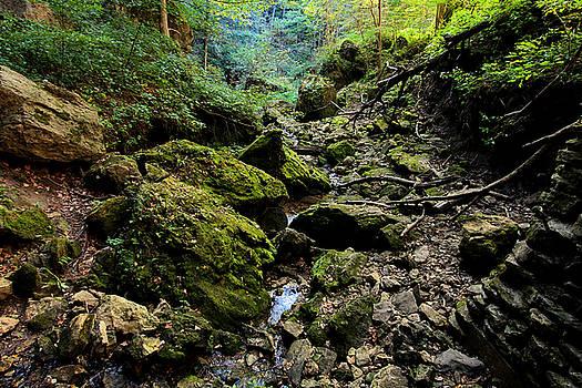 Forest Floor by Steve ODonnell