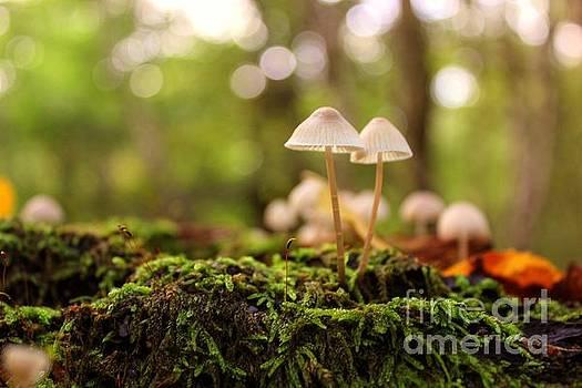 Forest Floor by Vicki Spindler