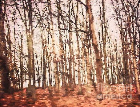 Forest Full of Dreams by Kerri Farley