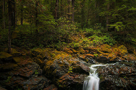 Forest Light by Larry Goss