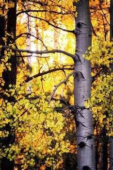 Saija Lehtonen - Forest Gold