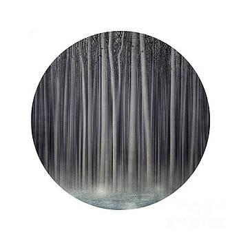 Forest in a circle by Priska Wettstein