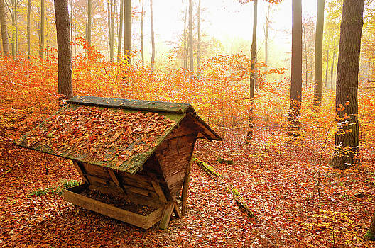 Forest in autumn with feed rack by Matthias Hauser