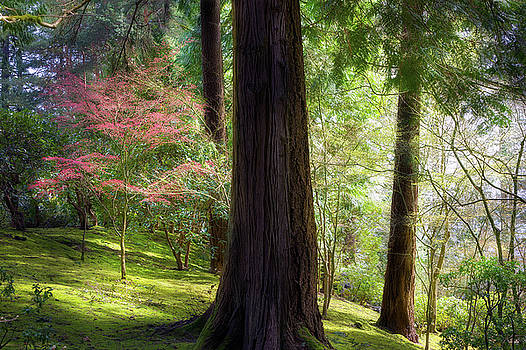 Forest in Portland Japanese Garden by David Gn