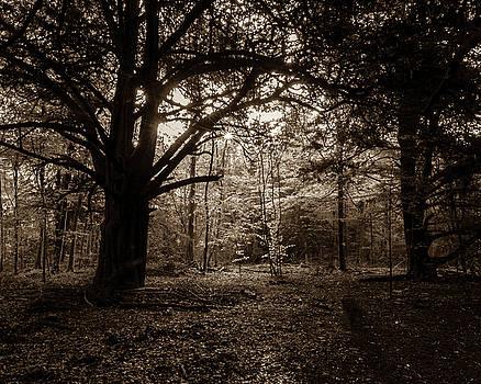 Jacek Wojnarowski - Forest in sepia tone, Somerset, England, UK